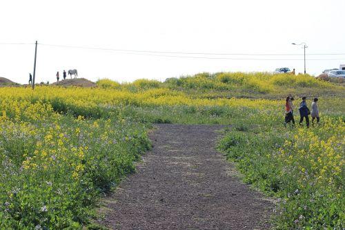 landscape flowers people