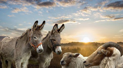 landscape animals donkeys