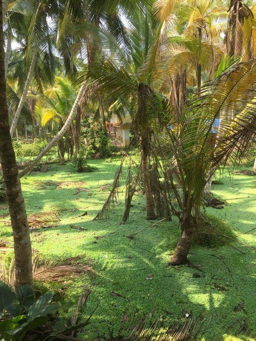 kraštovaizdis, Indija, peizažas, gamta, kovalamas, kerala, aplinka