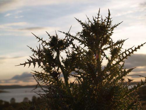 landscape marsh twilight