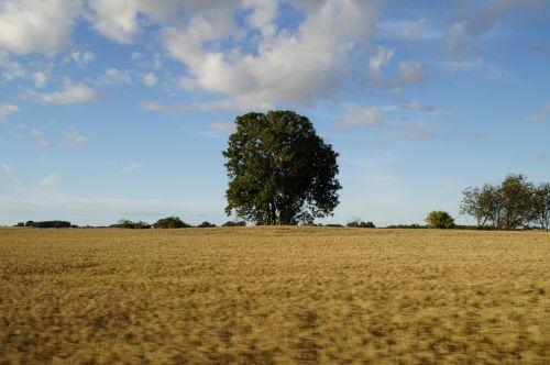 landscape rural grain fields