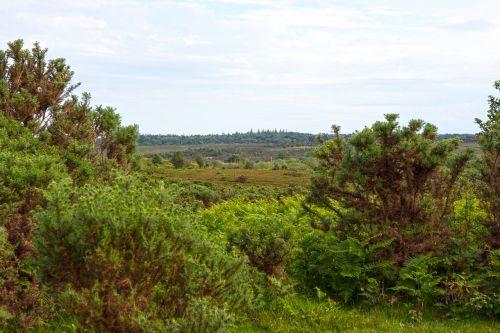 landscape view vista