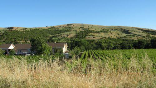 landscape vineyards napa