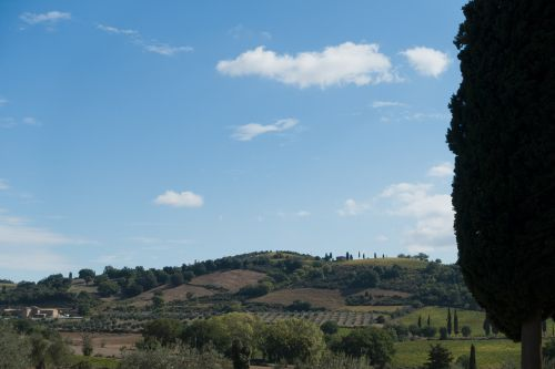 landscape cypress nature