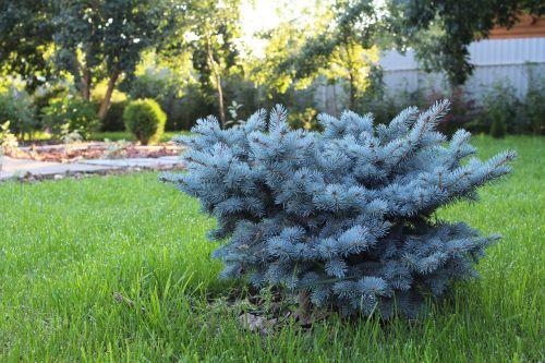 landscape design beautification planting of greenery