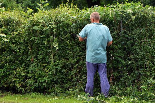 landscape gardener gardener workers