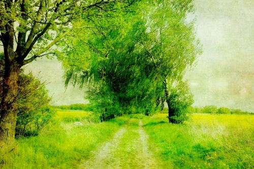 Landscape Painting Trees