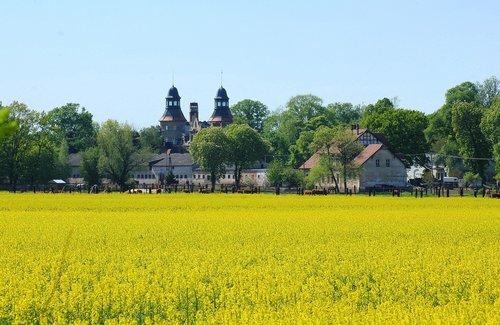 landscape rural  canola field  field