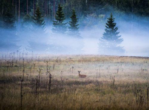 landscapes nature sweden