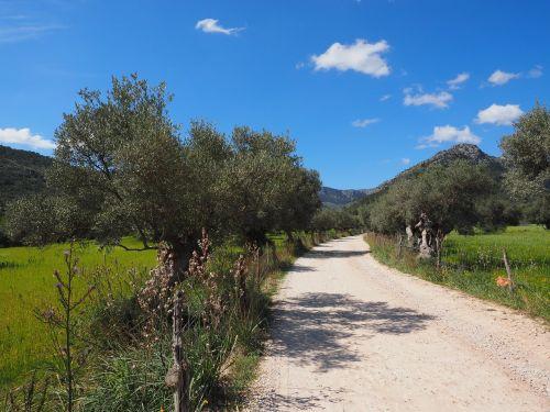 lane fields mallorca