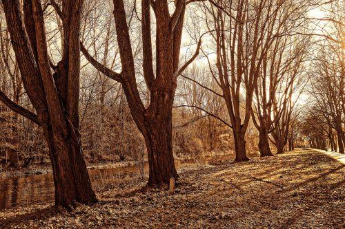 lane trees park