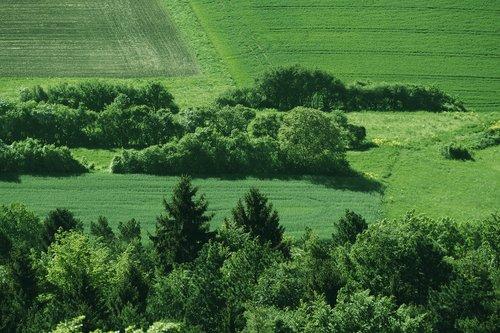 lane  arable  meadow