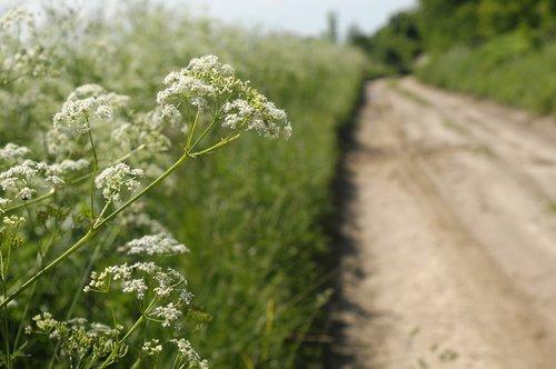lane  iłża  flower