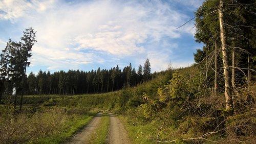 Lane, takas, Sauerland, remblinghausen, Meschede, pobūdį, toli, kraštovaizdis, medžiai, miškas, žalias, meadow, kraštovaizdžio būdas, žygiai, miško kelias, Promenade, idiliškas, eiti pasivaikščioti, ganyklos, gamtos takas, purvo bėgių, Dviračių takas, miško kelių, kaimo