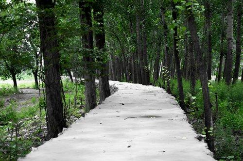 lane  background  mountain road