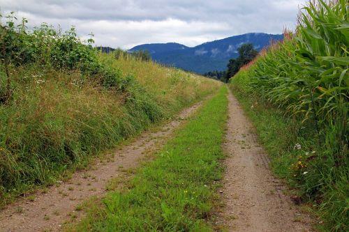 juostos,pieva,toli,gamtos takas,purvo kelias,komercinis kelias,gamta,žalias,laukas