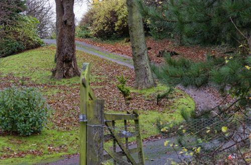Lane Through Woodland