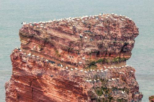lange anna,helgoland,landmark,rock,north sea,sea island,coast,landscape,cliffs,sea,sea birds