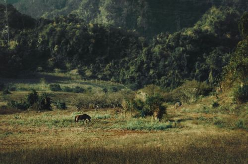 lanscape mountain country