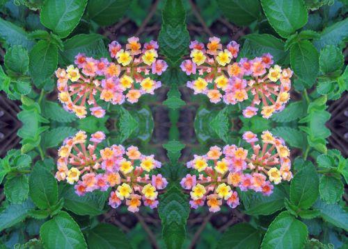 Lantana Flower Repeat