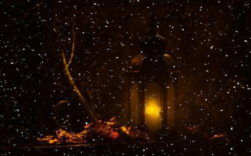lantern night forest