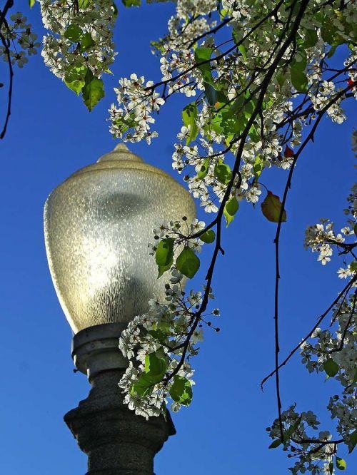 lantern park tree