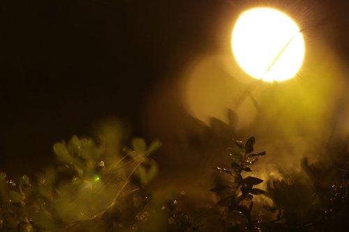 lantern  rain  night