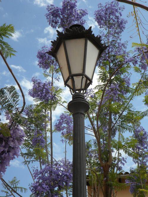 lantern jacaranda mediterranean