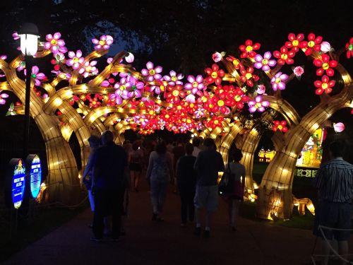 lantern plum blossom asian