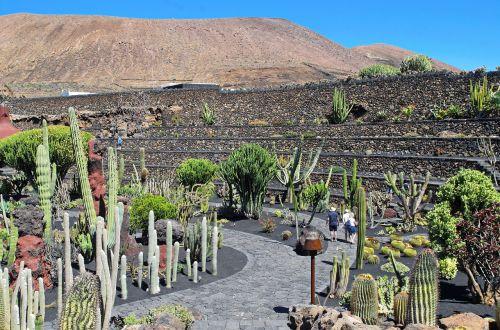 lanzarote cactus garden volcano
