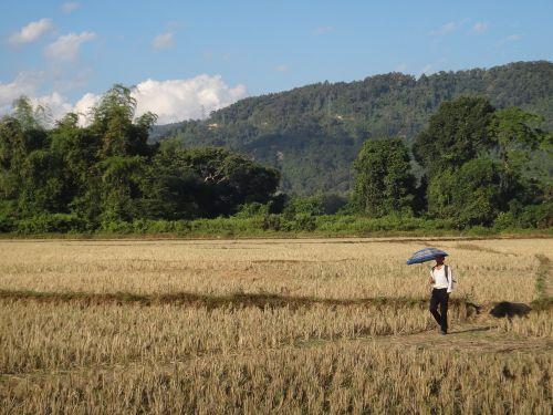 laos field walk