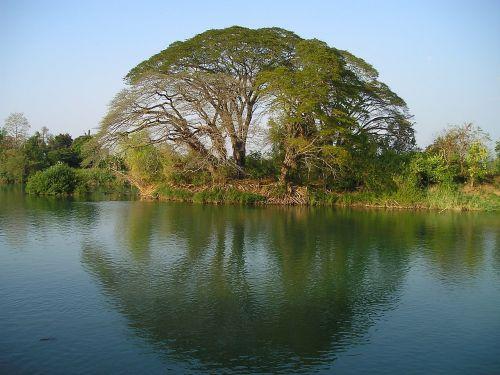laos tree water