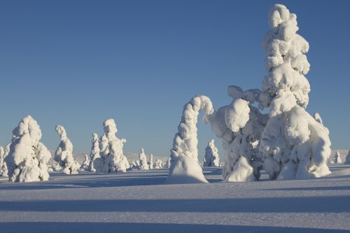 lapland winter snow
