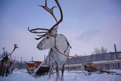 lapland  snow  rennes