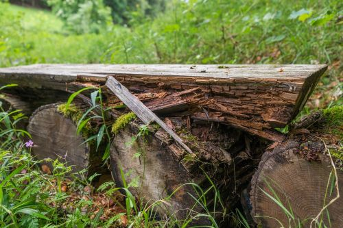lapsed forest wood