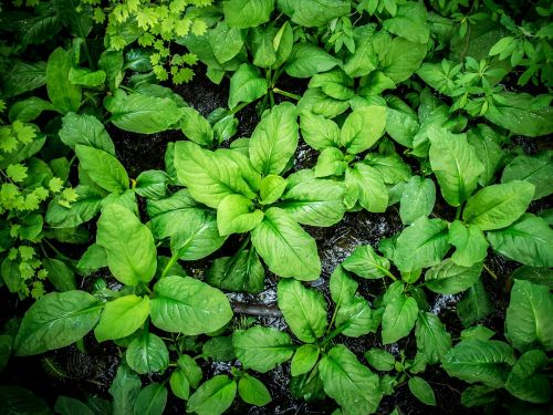 large broad leaf plant leaves lush colorful green