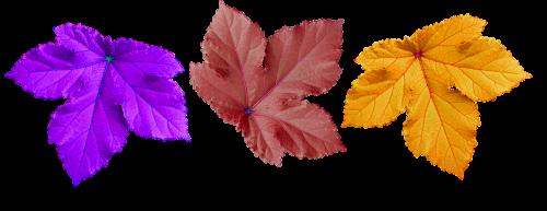 large leaf decorate background