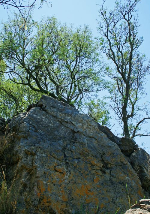 Large Rock And Green Tree