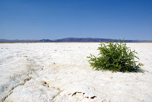 Last Life On A Salt Flat