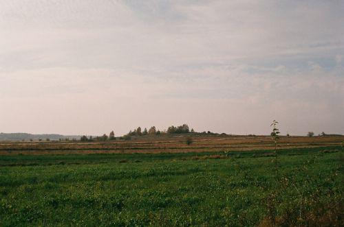 Janowskie Forests