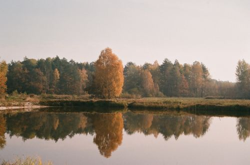 Forests Janowskie, Maliniec