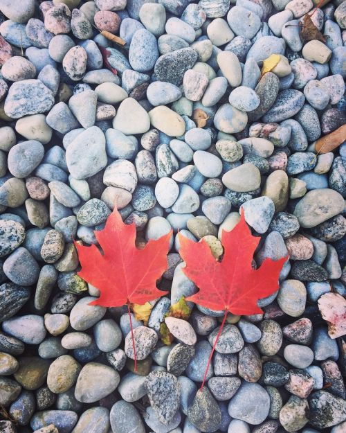 late autumn red leaves stone