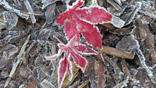late autumn ripe hoarfrost