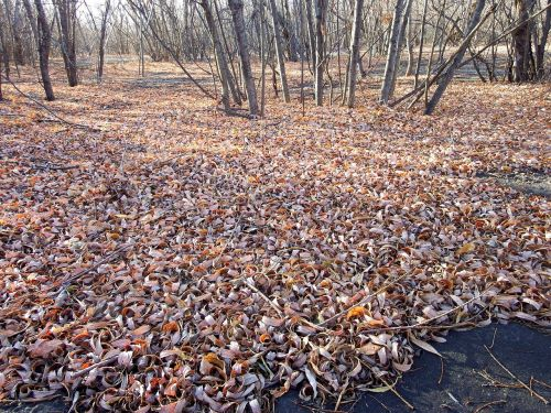 late autumn fallen leaves autumn