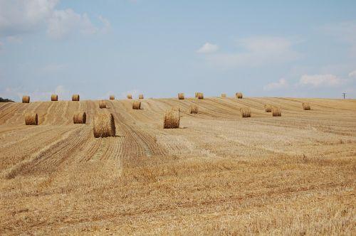 late summer harvest hay bales