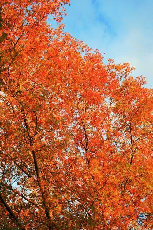 Late Sun On Autumn Tree