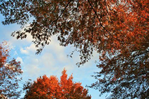 Late Sun On Orange Leaves