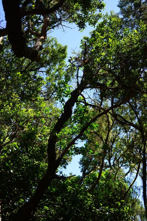 laurel forest tenerife anaga landschaftspark