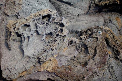 lava  cordee  tormented