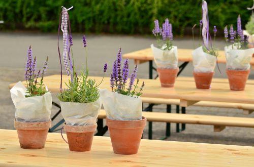 lavender flower pots beer tent set